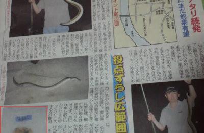 8/22つりニュース掲載